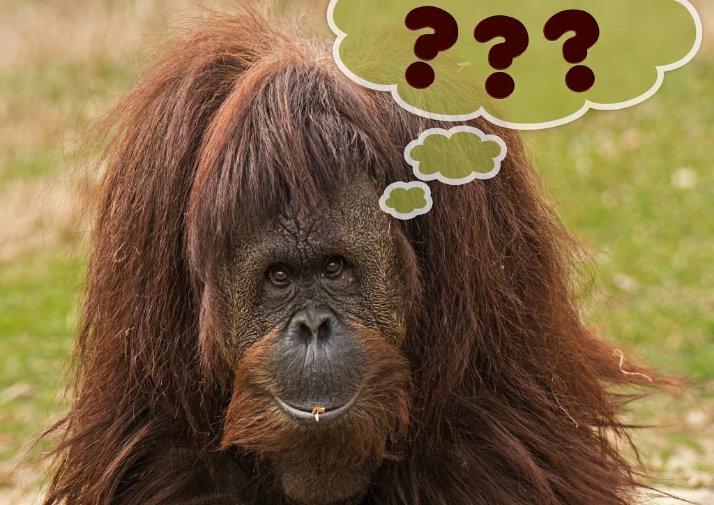 Monkey Think