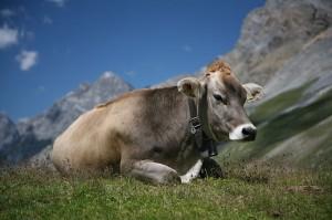Switzerland top expat country