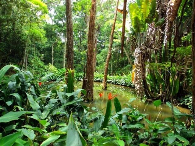 tijuca_forest_4_0